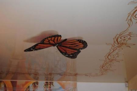 Бабочка, готовая вспорхнуть
