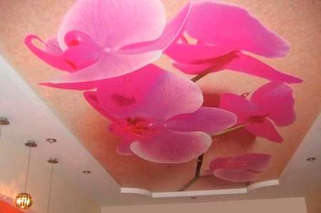 Орхидеи с подсветкой