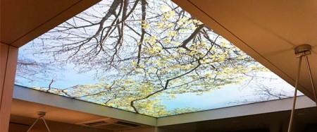 Деревья на фоне неба