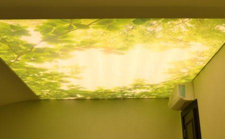 Фотопечать на полупрозрачном перекрытии создаст ощущение живой природы в комнате, фото