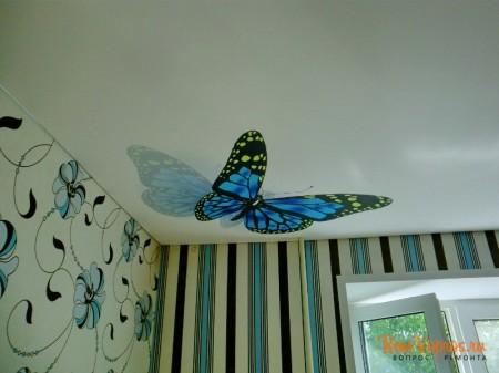 Фото бабочки прекрасное дополнение интерьера