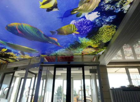 Фото потолка в стиле моря